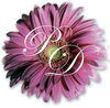 pink daisy's Avatar